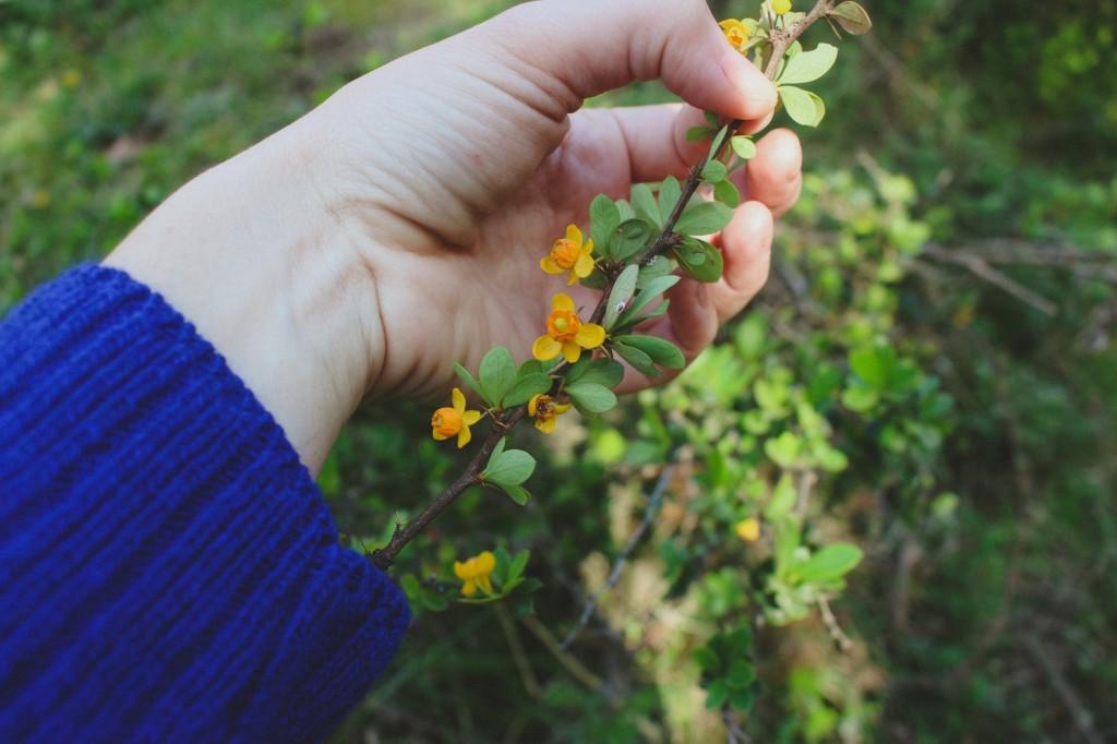 Caminata: reconocimiento de flora